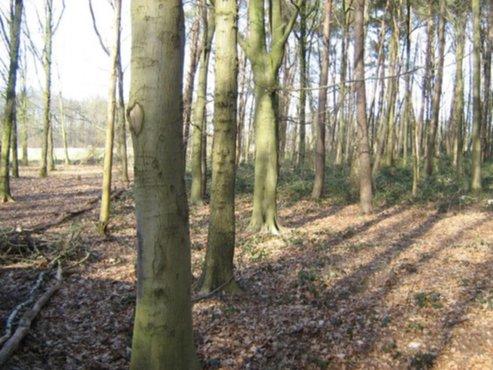 vastgoed te koop bouwgrond bos recreatiegrond